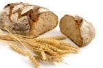 Toskanisches Landbrot und Weizenhren